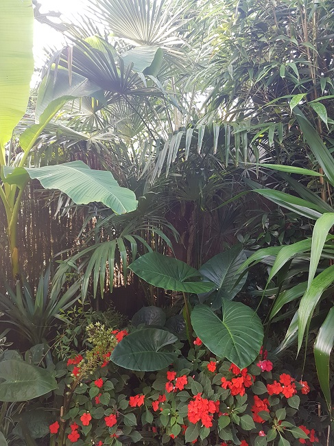Mon (tout) petit jardin en mode tropical Aprys_22