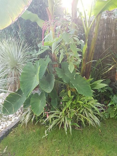 Mon (tout) petit jardin en mode tropical Aprys_23