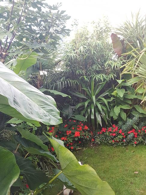Mon (tout) petit jardin en mode tropical Aprys_24