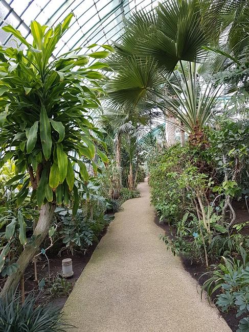 (75) Jardin des serres d'Auteuil - Paris Auteui10