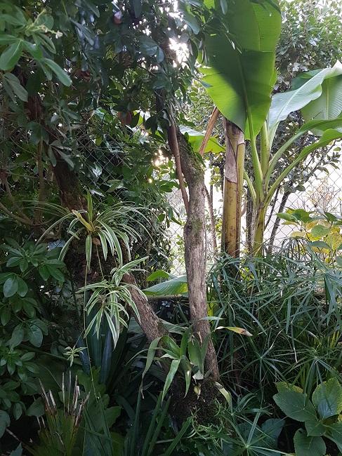 Support à épiphytes et broméliacées rustiques Avant_13