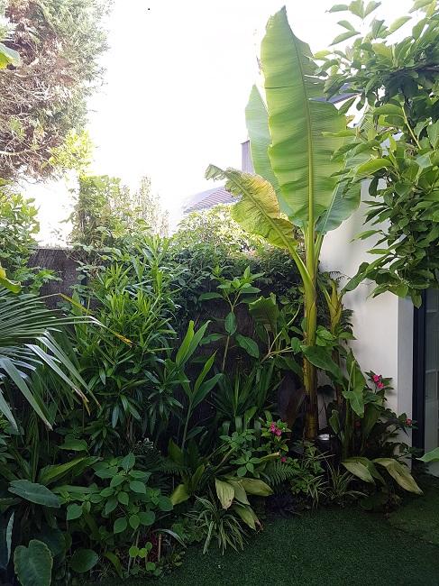Mon (tout) petit jardin en mode tropical Avant_16