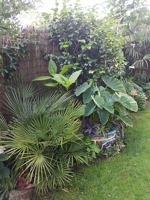 Mon (tout) petit jardin en mode tropical Avant_17