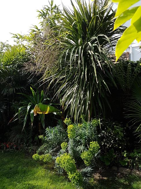 Mon (tout) petit jardin en mode tropical Avant_19