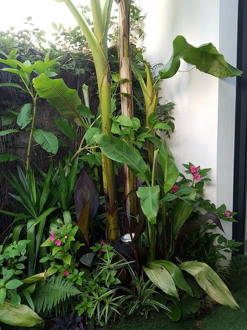 Mon (tout) petit jardin en mode tropical Avant_21