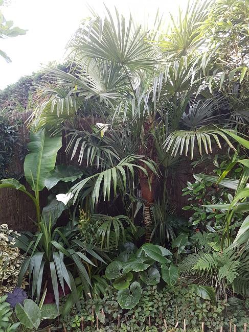 Mon (tout) petit jardin en mode tropical Avant_22