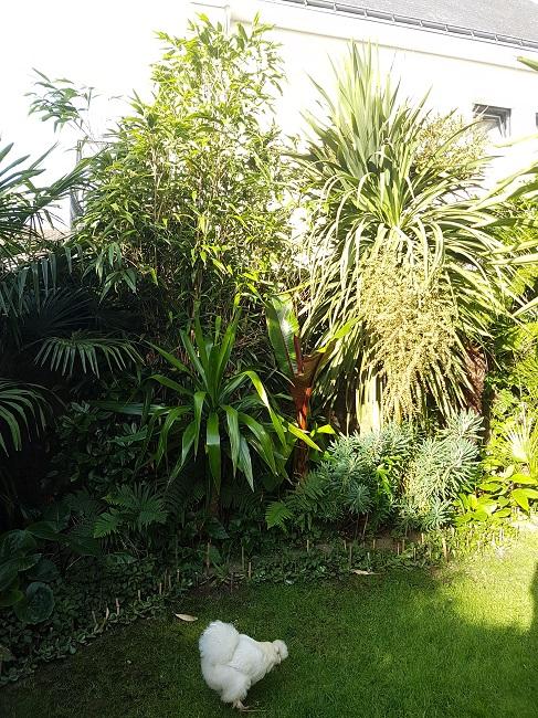 Mon (tout) petit jardin en mode tropical Avant_23