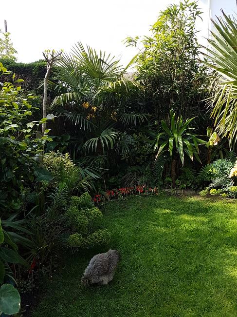 Mon (tout) petit jardin en mode tropical Avant_24
