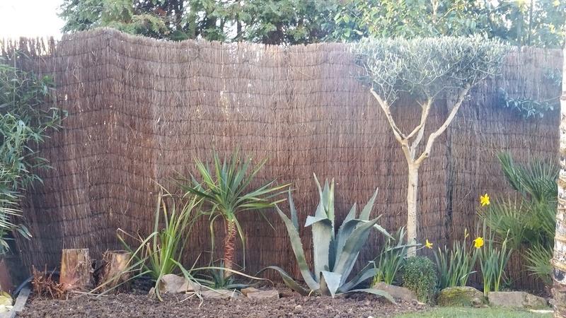 Mon (tout) petit jardin en mode tropical - Page 3 Avant_26