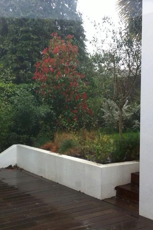 Mon (tout) petit jardin en mode tropical - Page 3 Avant_27