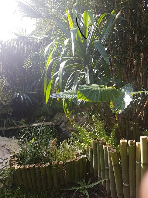 Écosystème bassin : développement des algues Bassin25