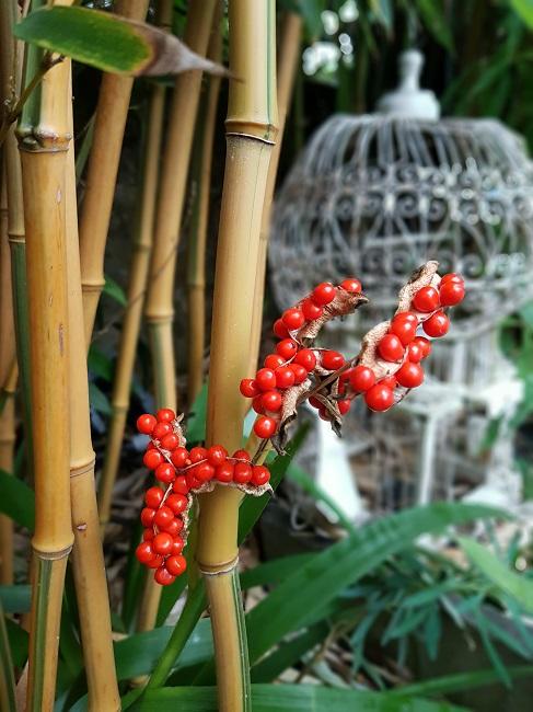 Rémi - Mon (tout) petit jardin en mode tropical - Page 2 F_1210