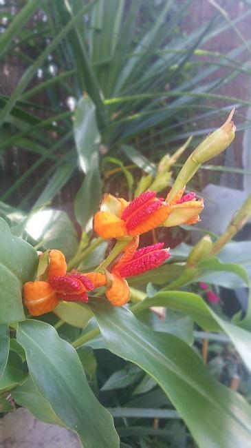 Rémi - Mon (tout) petit jardin en mode tropical - Page 2 F_210