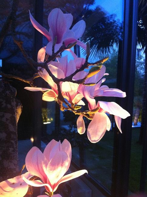 Rémi - Mon (tout) petit jardin en mode tropical - Page 2 F_410