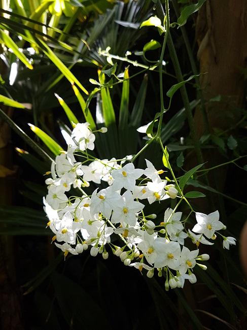 Rémi - Mon (tout) petit jardin en mode tropical - Page 2 F_710