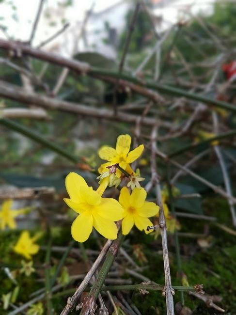 dernières fleurettes de l'année - Page 3 Fleure11