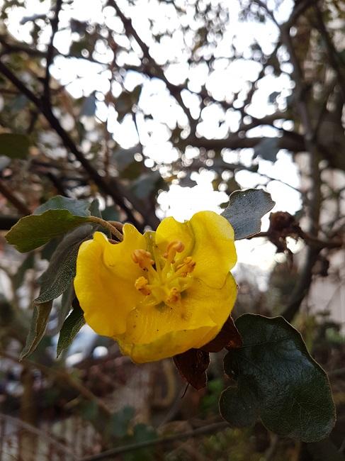 dernières fleurettes de l'année - Page 3 Fleure12