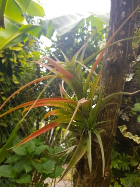Mon (tout) petit jardin en mode tropical Florai10