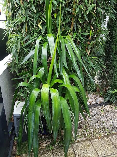 Mon (tout) petit jardin en mode tropical Gros_p10