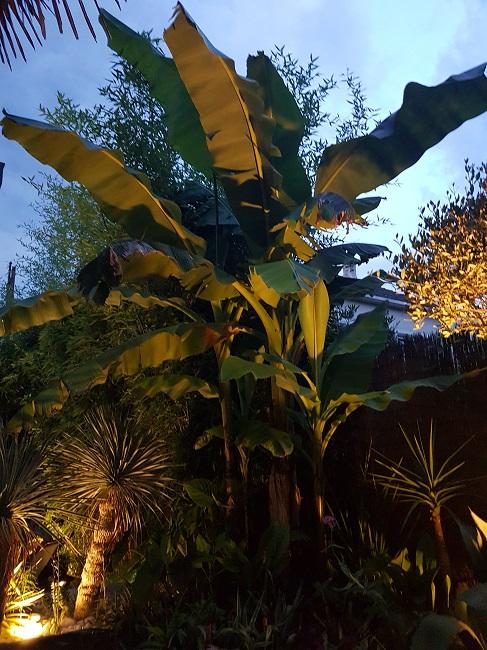 Rémi - Mon (tout) petit jardin en mode tropical - Page 2 J_1010