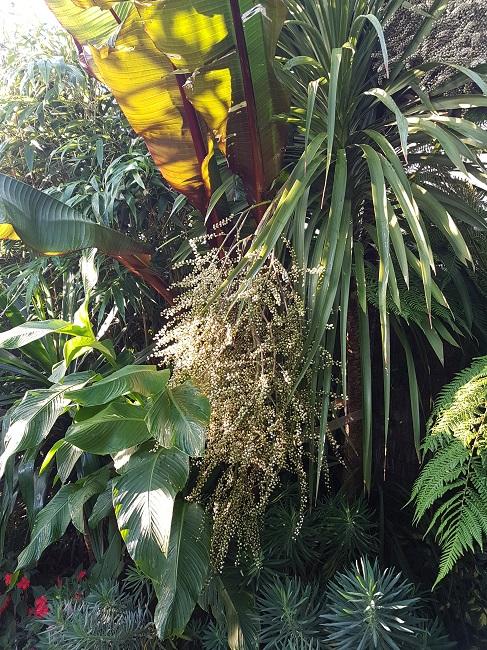 Rémi - Mon (tout) petit jardin en mode tropical - Page 2 J_110