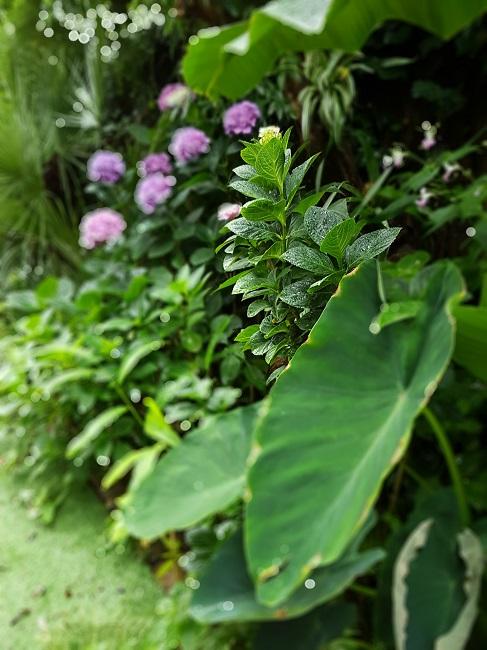 Rémi - Mon (tout) petit jardin en mode tropical - Page 2 J_1110