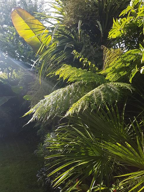 Rémi - Mon (tout) petit jardin en mode tropical - Page 2 J_1210
