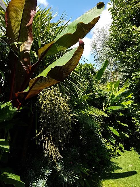 Rémi - Mon (tout) petit jardin en mode tropical - Page 2 J_1310