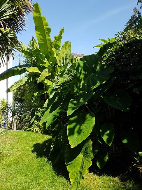 Rémi - Mon (tout) petit jardin en mode tropical - Page 2 J_1410