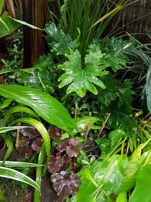 Rémi - Mon (tout) petit jardin en mode tropical - Page 2 J_1510