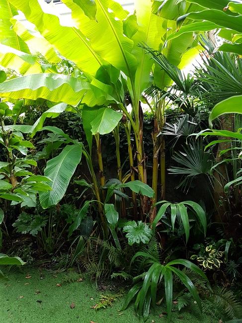 Rémi - Mon (tout) petit jardin en mode tropical - Page 2 J_1710