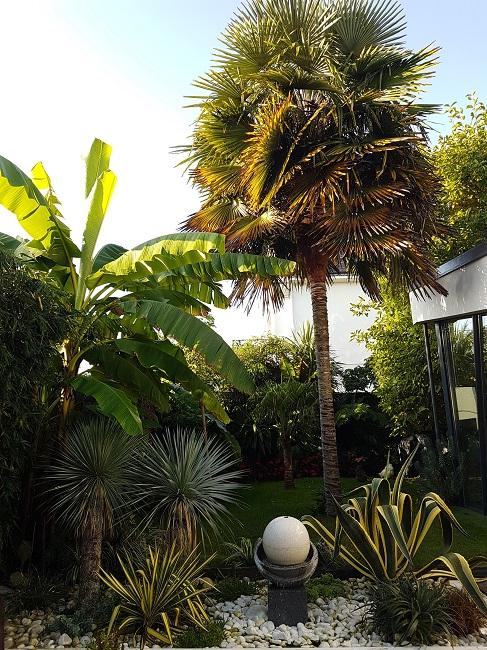Rémi - Mon (tout) petit jardin en mode tropical - Page 2 J_210
