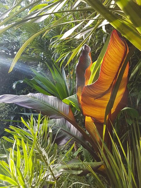 Rémi - Mon (tout) petit jardin en mode tropical - Page 2 J_410
