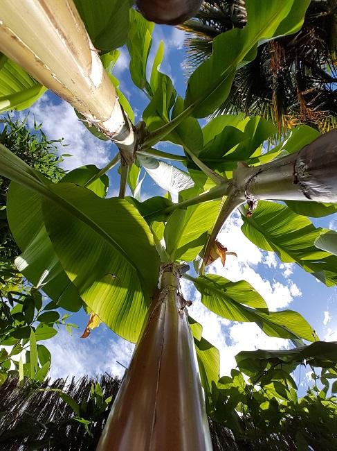 Rémi - Mon (tout) petit jardin en mode tropical - Page 2 J_510