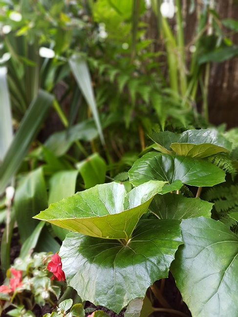 Rémi - Mon (tout) petit jardin en mode tropical - Page 2 J_610