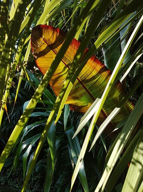 Rémi - Mon (tout) petit jardin en mode tropical - Page 2 J_710