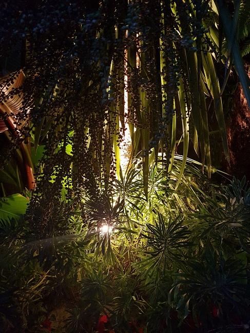 Rémi - Mon (tout) petit jardin en mode tropical - Page 2 J_910