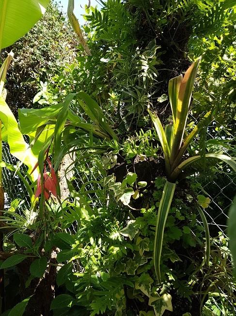 Mon (tout) petit jardin en mode tropical Jardin16