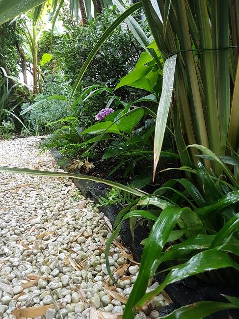 Mon (tout) petit jardin en mode tropical Jardin19