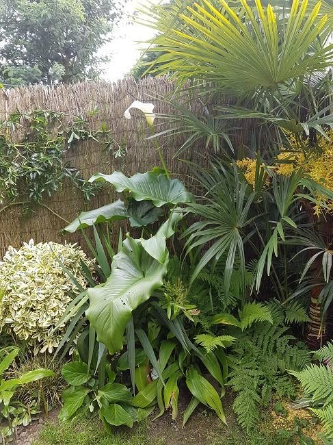 Mon (tout) petit jardin en mode tropical Jardin22