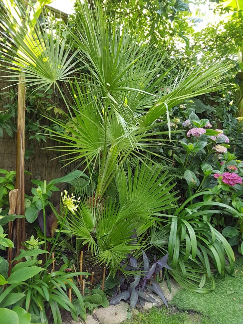 Mon (tout) petit jardin en mode tropical Jardin25