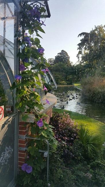 (44) Jardin des plantes - Nantes Jardin42