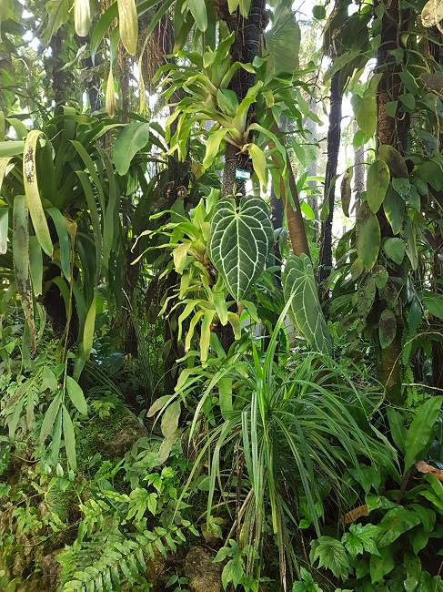 Bromeliaceae - famille - collections  - Page 4 Palmar12