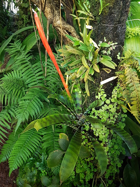 Bromeliaceae - famille - collections  - Page 4 Palmar18