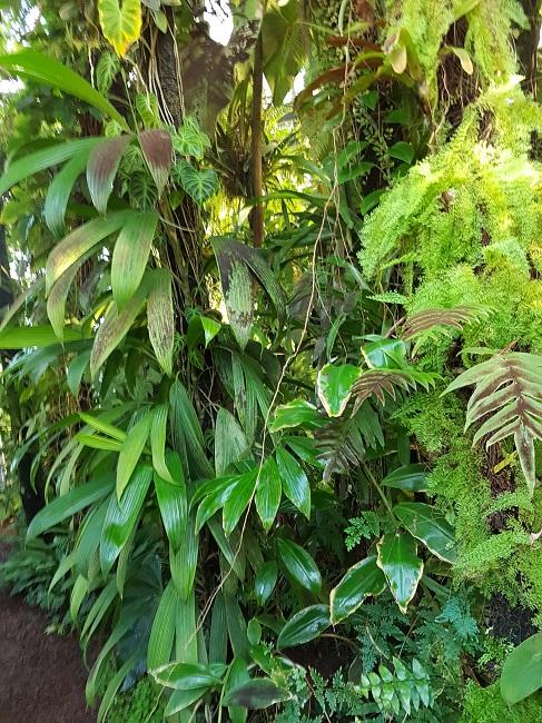 (44) Jardin des plantes - Nantes - Page 2 Palmar29