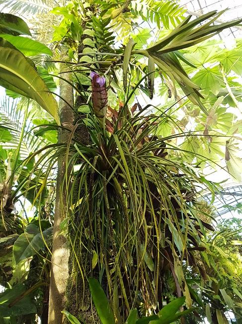 (44) Jardin des plantes - Nantes - Page 2 Palmar30
