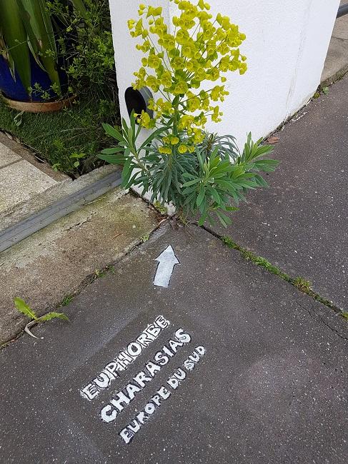 Végétaliser un trottoir - Page 2 Pochoi10