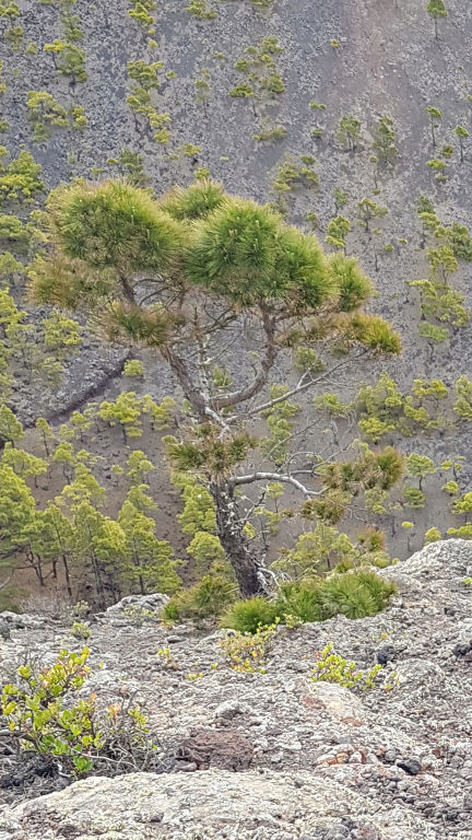 Espagne - La Palma (Isla Bonita), Les Canaries - Page 2 Screen16
