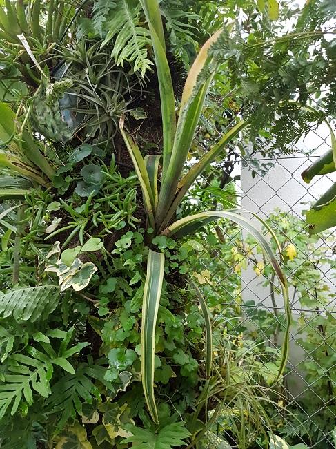 Support à épiphytes et broméliacées rustiques - Page 2 Se_bil15