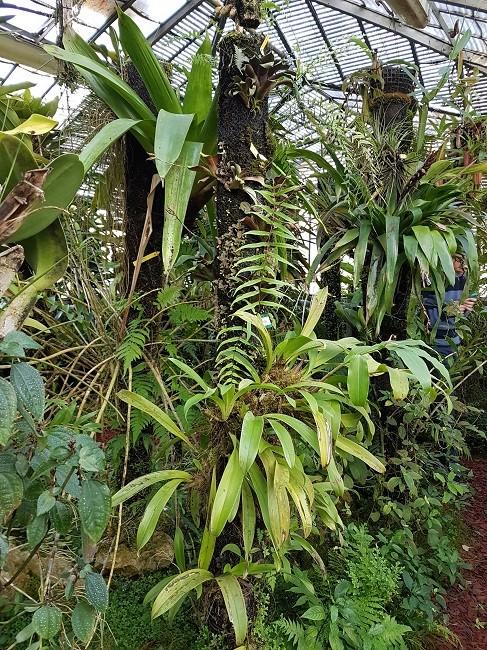 Support à épiphytes et broméliacées rustiques Suppor17